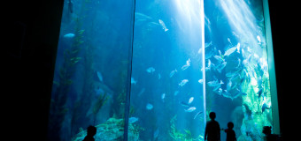 Visit the Sea Jellies Exhibit and more at The Aquarium of the Pacific