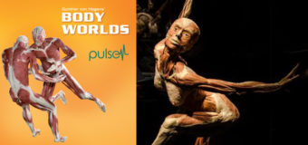 BODY WORLDS: Pulse at the California Science Center