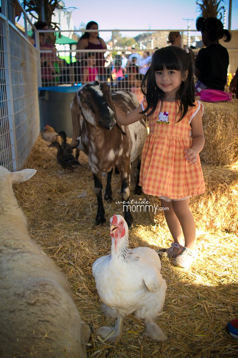 Mr. Bones Pumpkin Patch Culver City Petting Zoo Farm